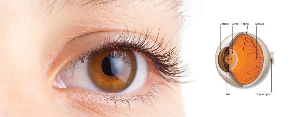 retinologo en oaxaca